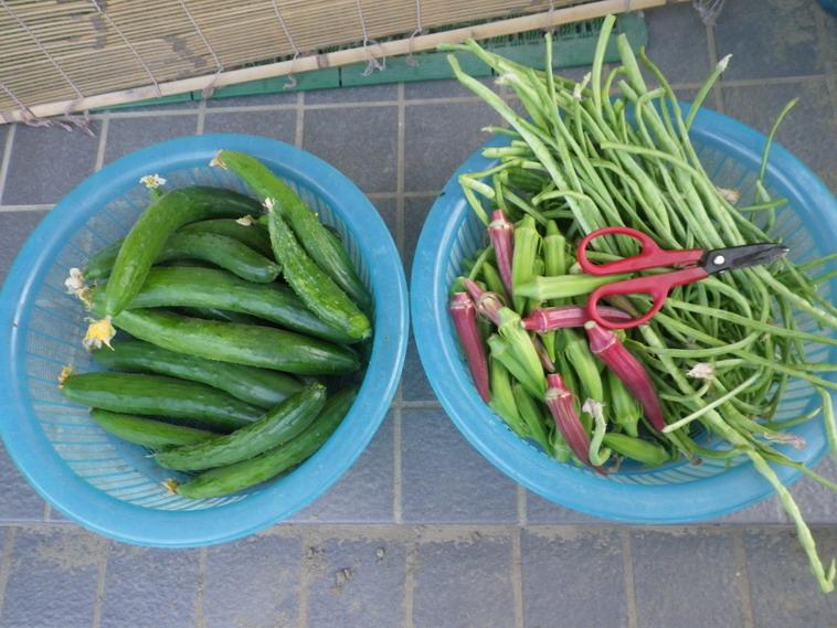 収穫2_14_08_01