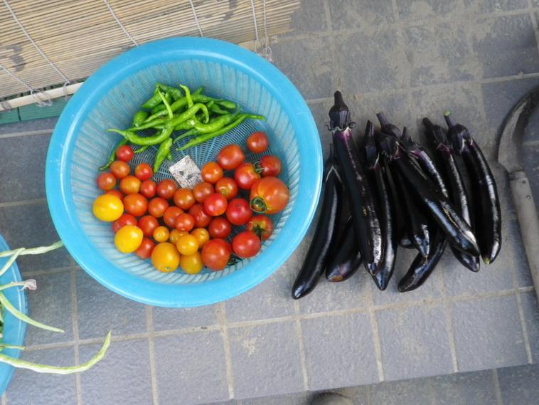 収穫1_14_08_01