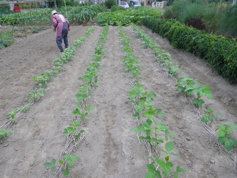 豆畑14_08_02
