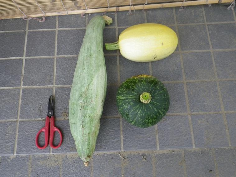 収穫カボチャ14_08_03