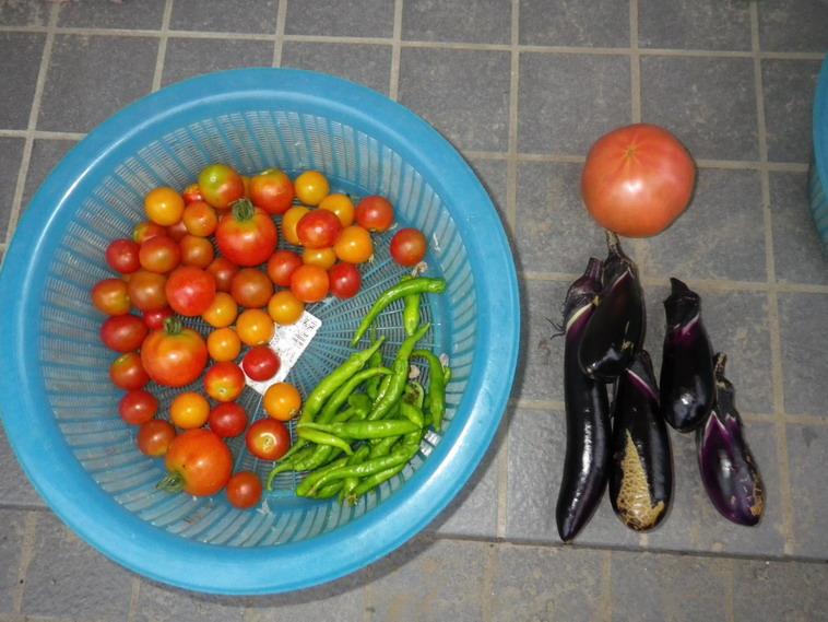 収穫2_14_08_04