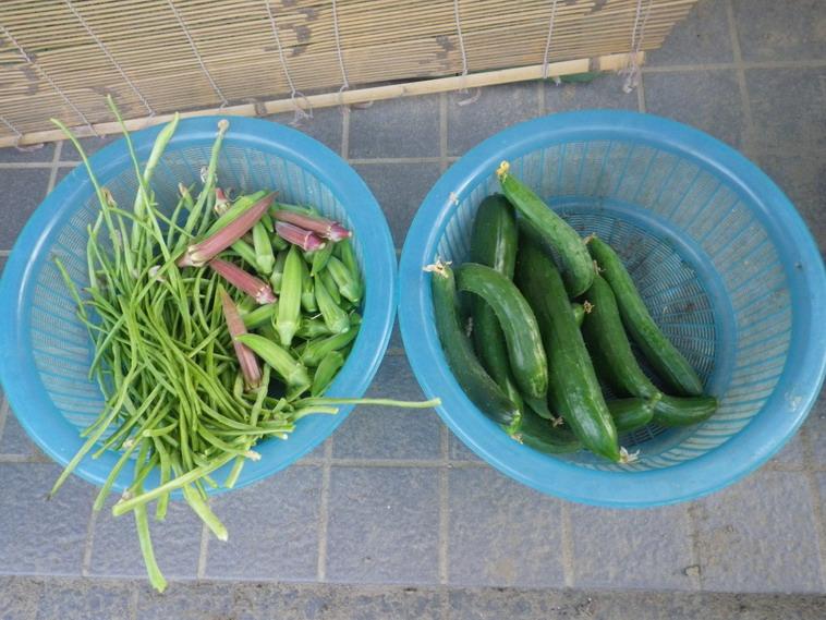 収穫1_14_08_05