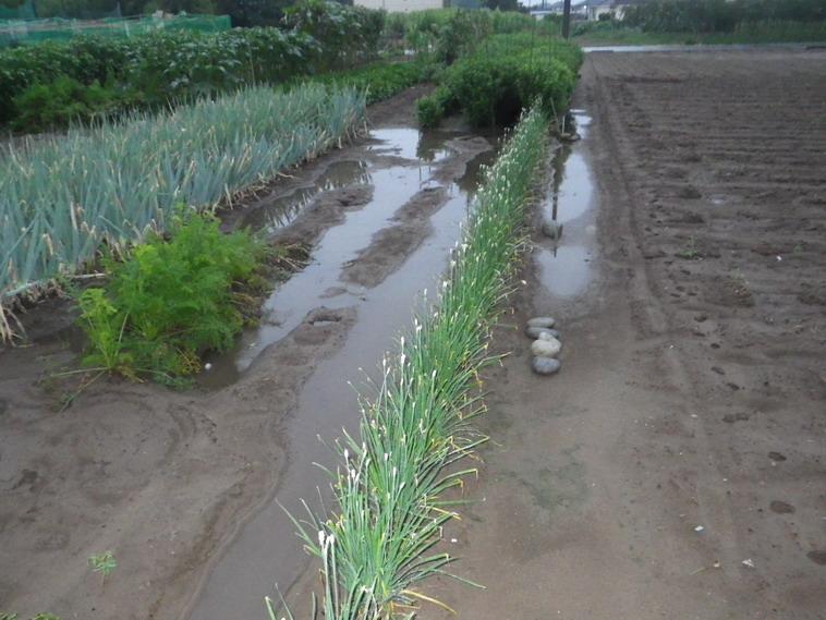 水溜まり14_08_08