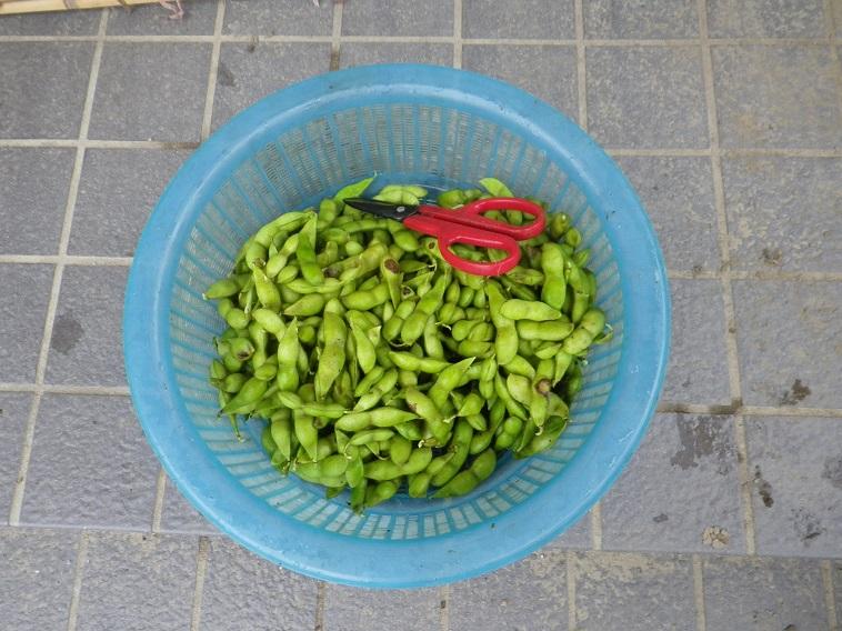収穫4_14_08_09