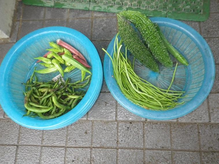朝の収穫14_08_10