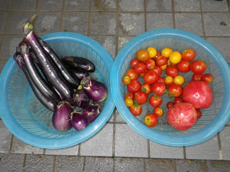 収穫トマト&ナス14_08_10
