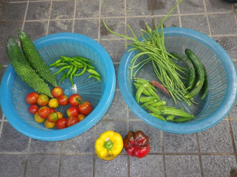収穫14_08_11
