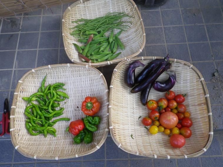 収穫14_08_13