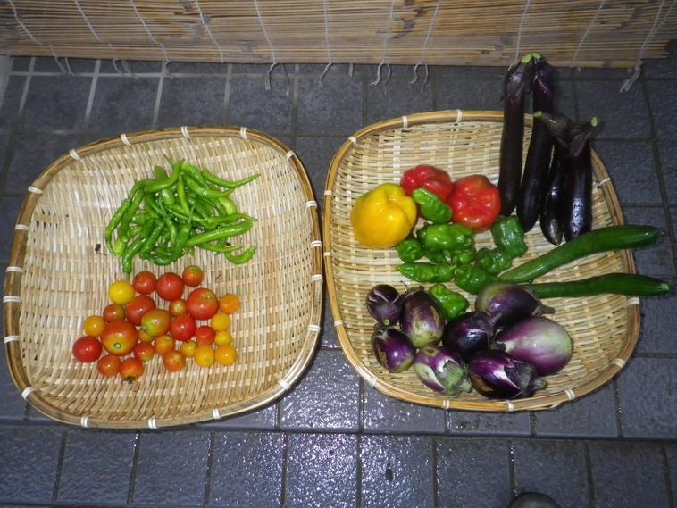 収穫1_14_08_15