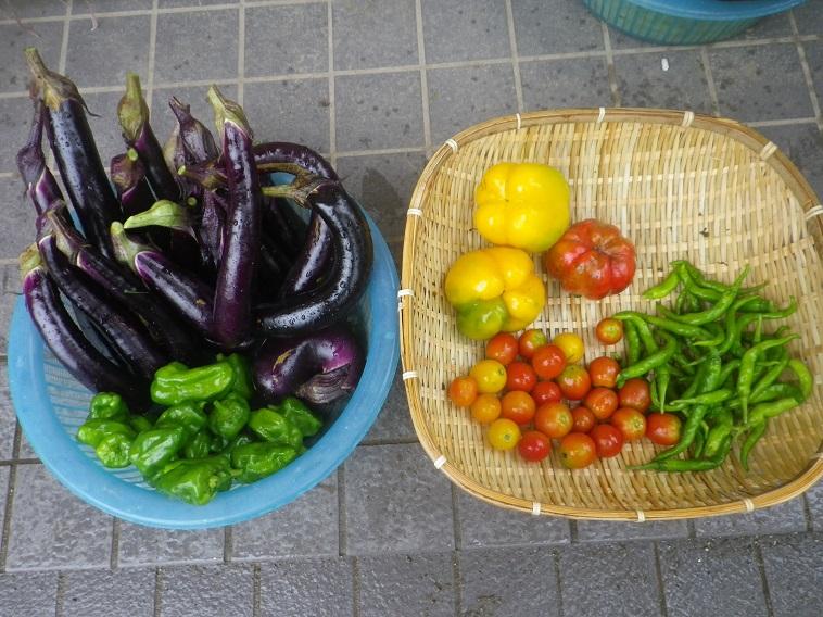 収穫朝2_14_08_17