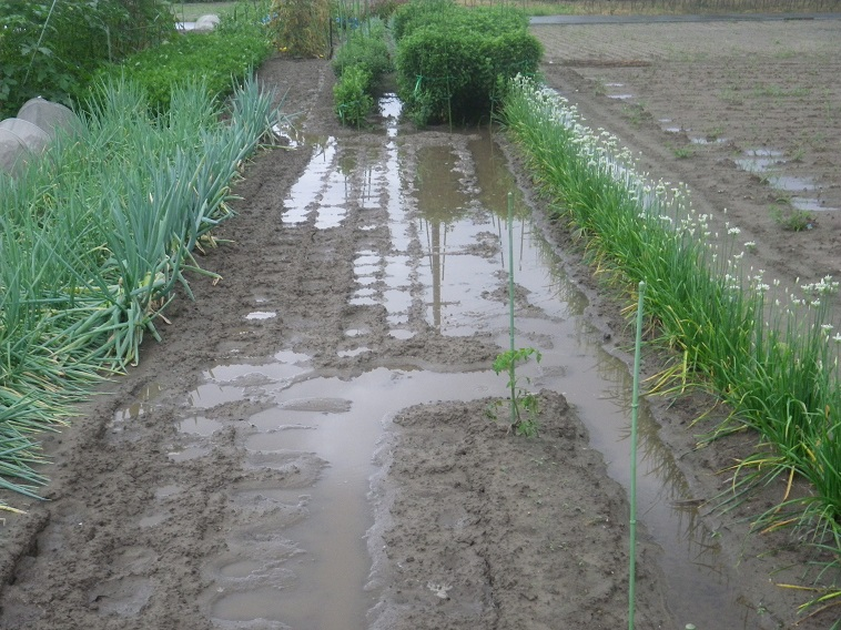 雨後14_08_17