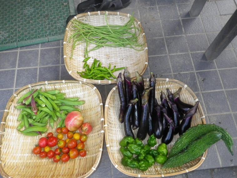 収穫14_08_19