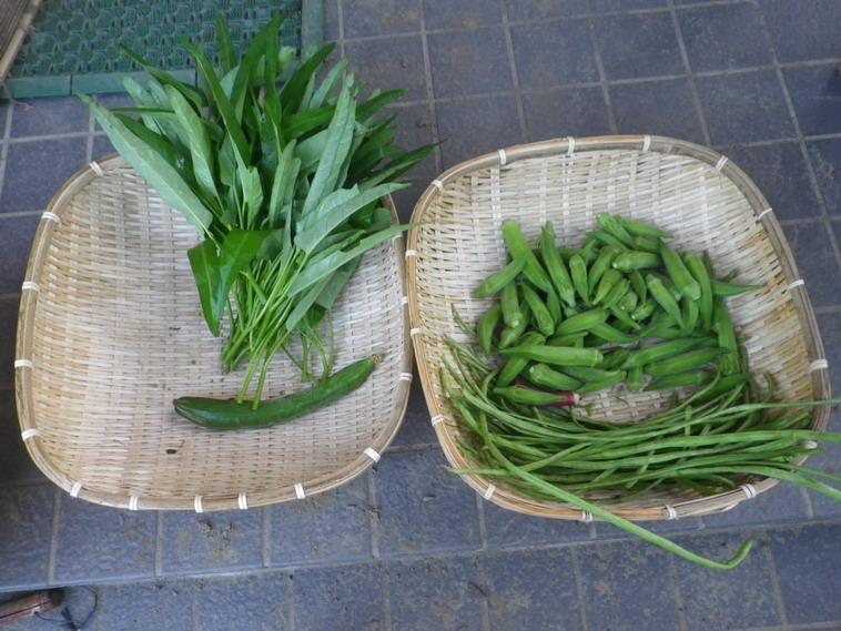 収穫14_08_20