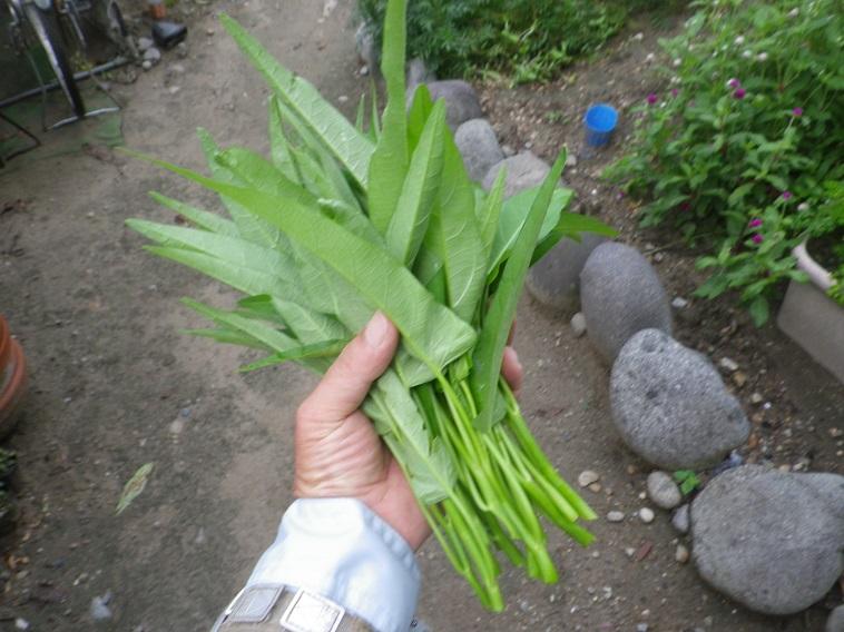 収穫3_14_08_23