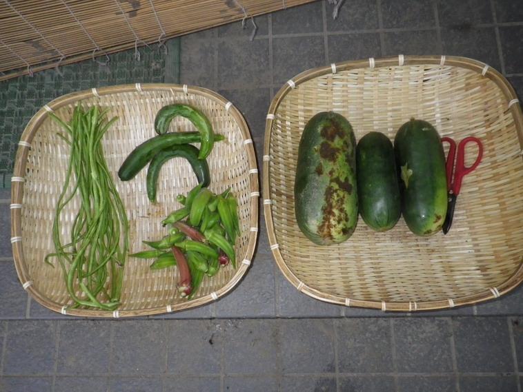 収穫14_08_25