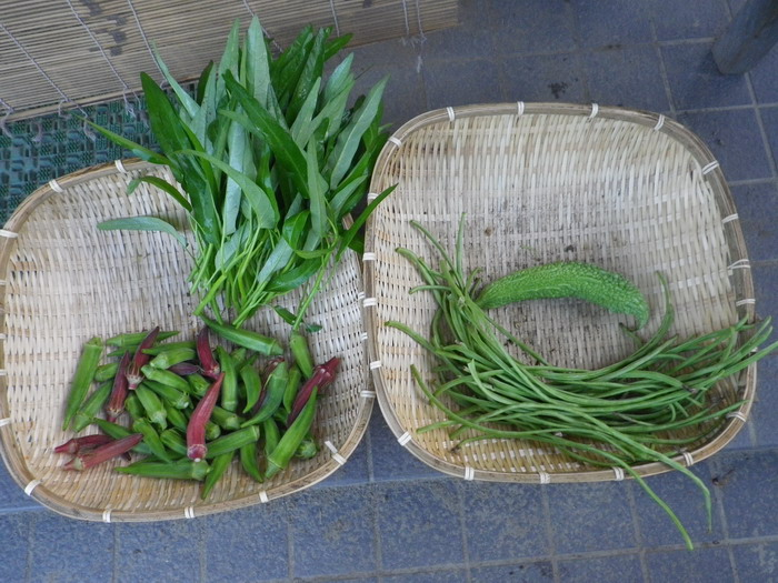 収穫14_08_27
