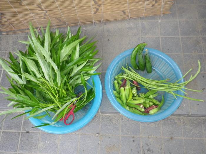 収穫14_08_29