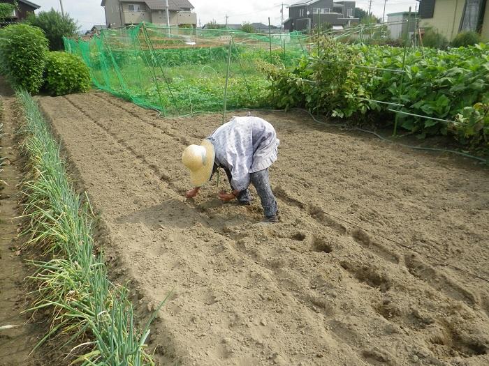 白菜種蒔き1_14_08_31