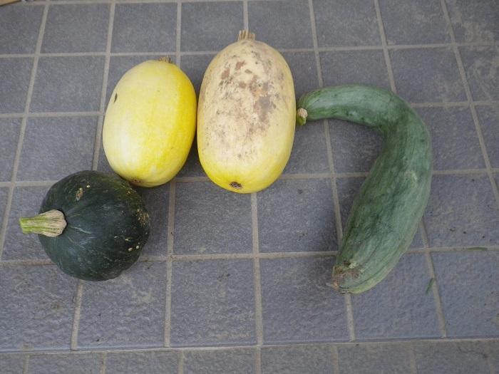 収穫カボチャ14_08_31
