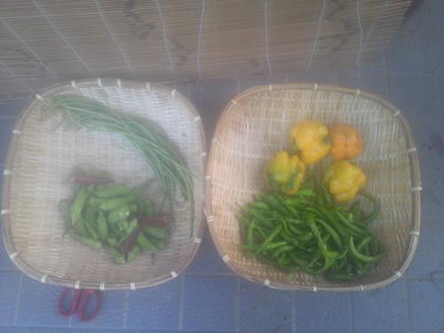 収穫14_09_02