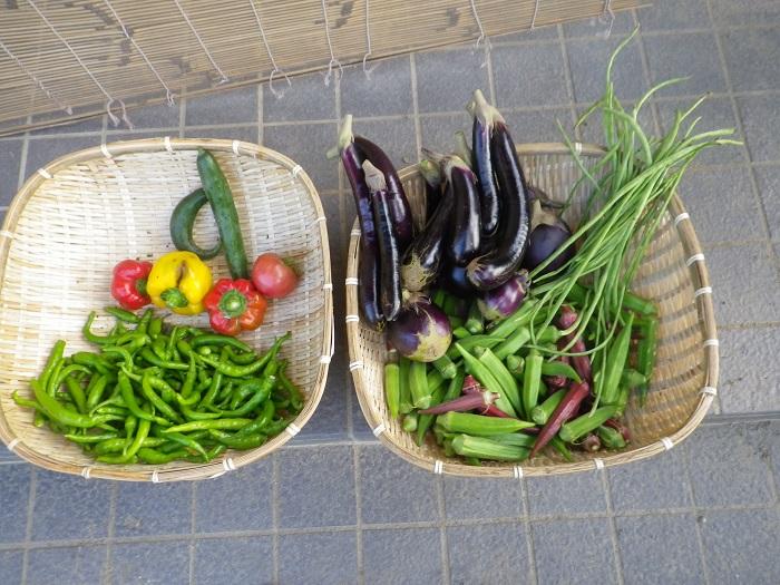 収穫14_09_06