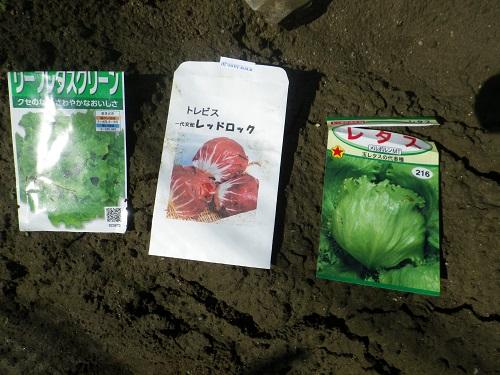レタス種袋14_09_07