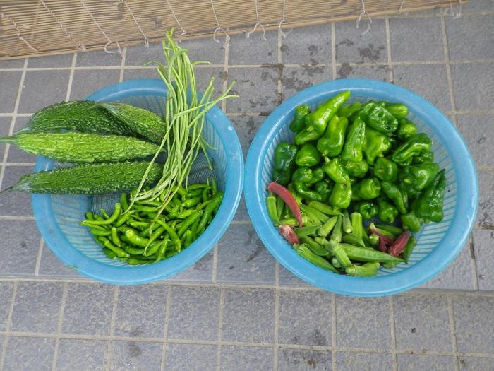 収穫朝14_09_07