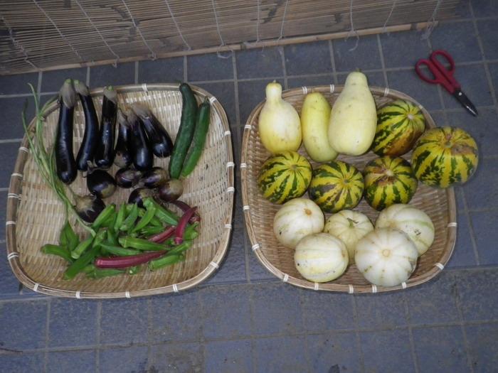 収穫14_09_08