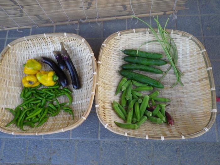 収穫14_09_09