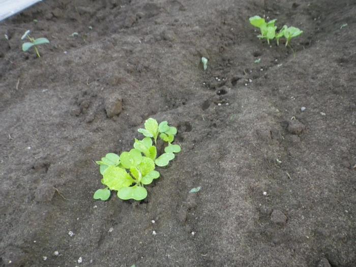 白菜14_09_09