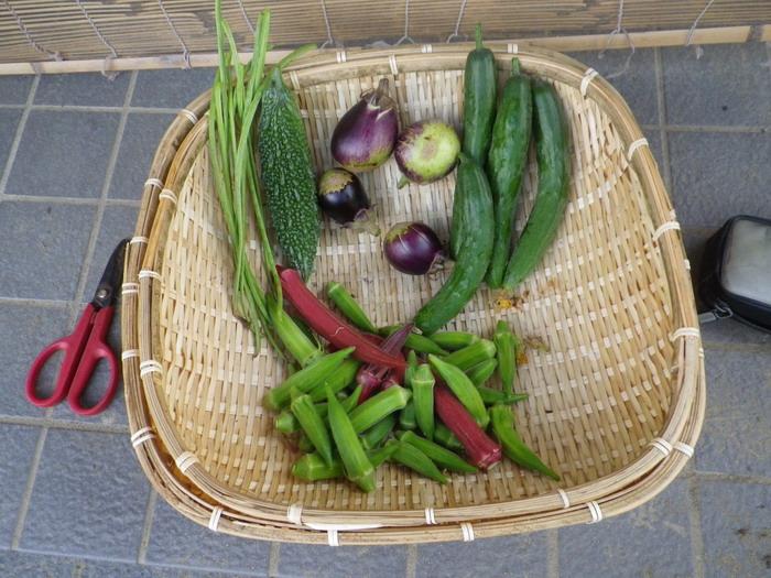 収穫14_09_10