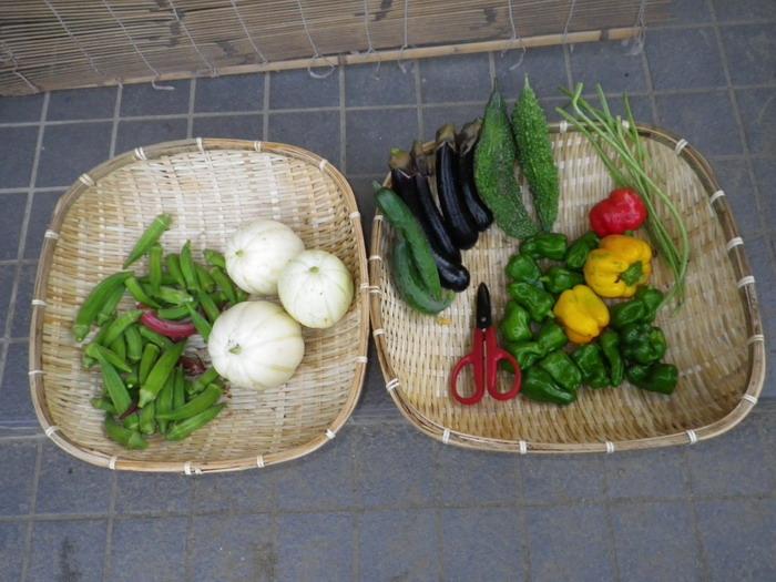 収穫14_09_11