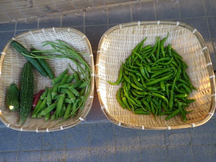 収穫14_09_12
