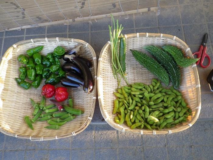 収穫14_09_13