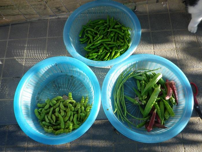 収穫14_09_14
