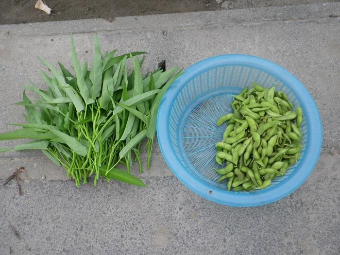 収穫枝豆&エンツァイ14_09_15