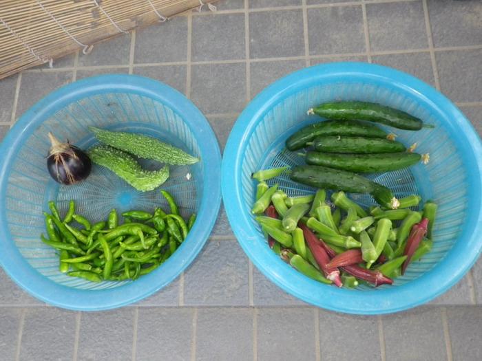 収穫14_09_16
