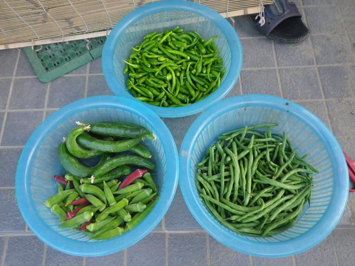 収穫14_09_18