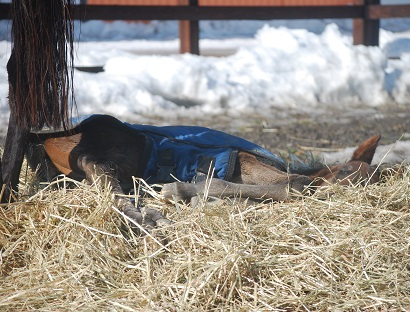 2・あくび・寝藁の上で