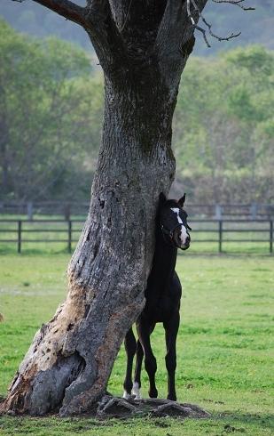 2・アステア・1歳5月大樹