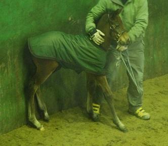 3・種付け・当て馬を待つ