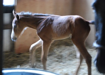 5・誕生・馬房の中を