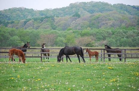 5・合流・1歳馬たちのぞく