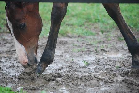 7・蹄・泥遊び中