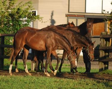 8・ワー・行儀の良い牝馬たち