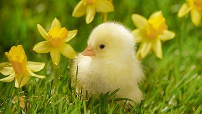wallpaper-chick-photo-03.jpg