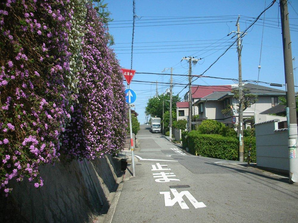 NikonのCOOLPIX S3で撮った花咲く坂