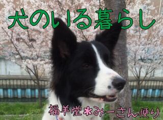にほんブログ村 犬のいる暮らし