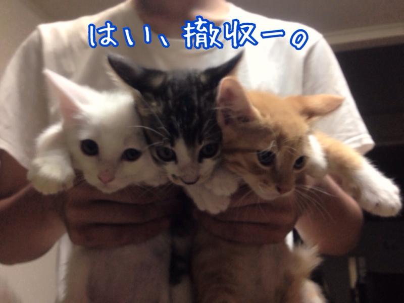 fc2blog_20140716233318a1c.jpg