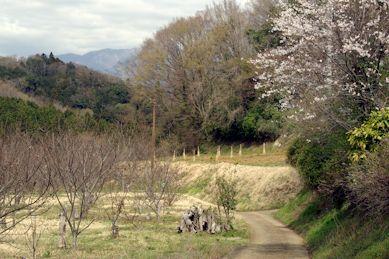 芽吹き始めた雑木林